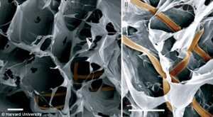 Biocompatible nanoscale wiring embedded in synthetic tissue.